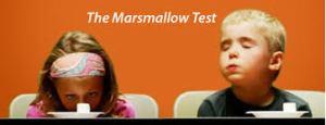 marshmallow-testi