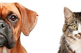 Çocuğunuzun Gelişimine ve Yaşına Uygun Evcil HayvanSorumlulukları